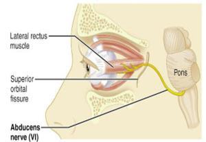 abducens nerve